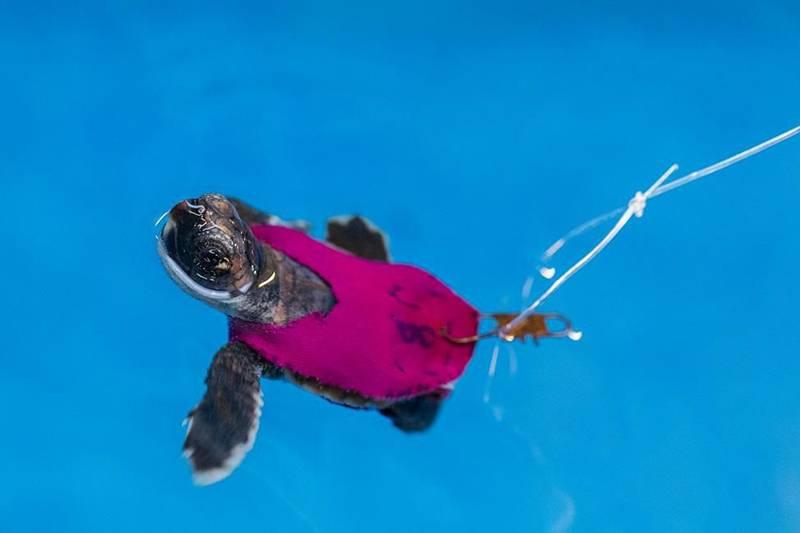 海龟跑步机